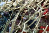 Cão juvenil em um coral com tesão radialmente. — Foto Stock