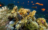 Tropical underwater life in the Red Sea. — Stock Photo