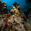 Coral and fish in the Red Sea. — Stock Photo #10770932