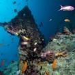 Stern of the Thistlegorm wreck. - Foto de Stock