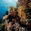 Coral and fish in the Red Sea. — Stock Photo #10778337