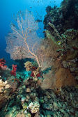 Seafan と魚 — ストック写真