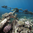 Stock Photo: Wreck Germfreighter Kormor- sank in 1984 Tiran