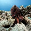 Octopus and ocean - Stock Photo