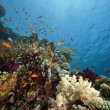 Ocean, coral and fish — Foto de Stock