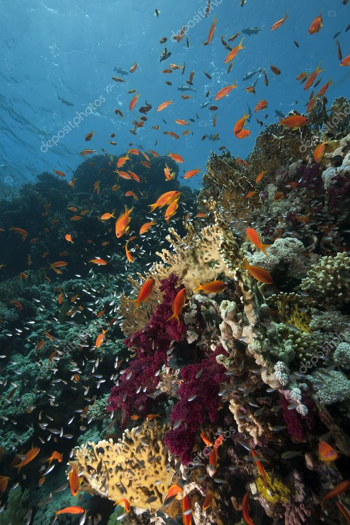 Ocean,coral and fish — Stock Photo #10817054