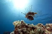 Ohnivý oceán a — Stock fotografie