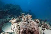 Kegel shell en oceaan — Stockfoto
