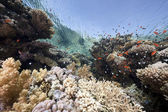 Ocean, coral and fish — Stock Photo
