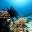 Feather star and ocean - Stockfoto
