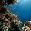 Ocean, coral and fish - Stockfoto