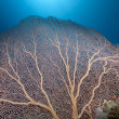 Seafan, coral and fish - Stockfoto