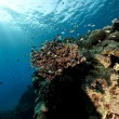 Fish and coral in the Red Sea. — Lizenzfreies Foto