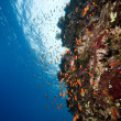 Fish and coral in the Red Sea. — Stock Photo