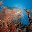 Seafan and fish in the Red Sea. — Stock Photo #10842721
