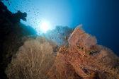 Seafan en vis in de rode zee. — Stockfoto