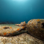 resterna av kormoran skeppsbrott och vackra koraller tillväxt — Stockfoto