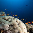 Bubble coral, fish and ocean — Stockfoto