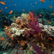 Fish, coral and ocean — Stock Photo #10852914