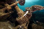 Remains of the Kormoran shipwreck and beautiful coral growth — Stock Photo