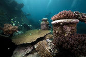 Remains of the Kormoran shipwreck and divers exploring the area — Stock Photo