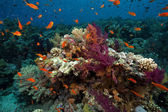 Fish, coral and ocean — Stock Photo