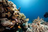 Mar y peces — Foto de Stock