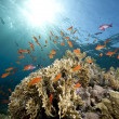 Stock Photo: Ocean,coral and fish