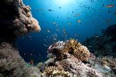 Ozean, Korallen und Fische — Stockfoto