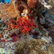 Red sponge and tropical reef in the Red Sea. — Stock Photo