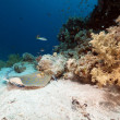 Bluespotted stingray in the Red Sea. — ストック写真