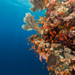 Tropical reef in the Red Sea. — Stock fotografie