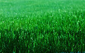 Sparkling Grass — Stock Photo