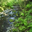 Forest stream - Photo