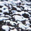 First snow — Stockfoto