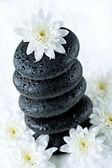 Flower above stones — Stock Photo