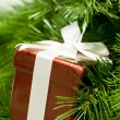 Gift on branch — Stock Photo