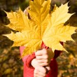 Giving maple leaf - Stock Photo