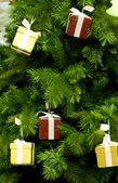 Magic fir tree — Stock Photo