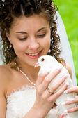 Pigeon in hands — Stock Photo