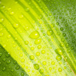 Droplets on leaf — Stock Photo