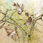 Three sparrows — Stock Photo