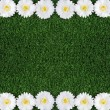 Camomile frame - Stock Photo