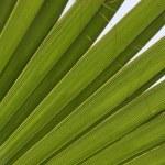 Green plant — Stock Photo #11215790