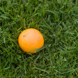 Orange in grass - Stock Photo