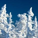 ijzig uitzicht — Stockfoto