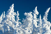 Frosty view — Stock Photo