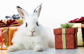 Rabbit and gifts — Stock Photo