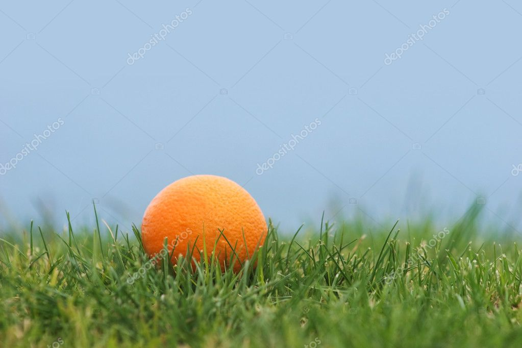 Image of ripe orange in green grass with blue sky at background — Stock Photo #11215914