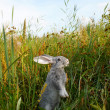 Stock Photo: Bunny in grass